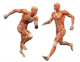 Pengertian Sistem Otot Manusia Beserta Struktur, Sifat Gerak, Jenis, Cara Kerja, Dan Fungsinya Terlengkap