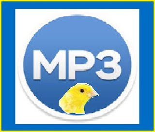 Melatih Burung Kenari dengan Mp3