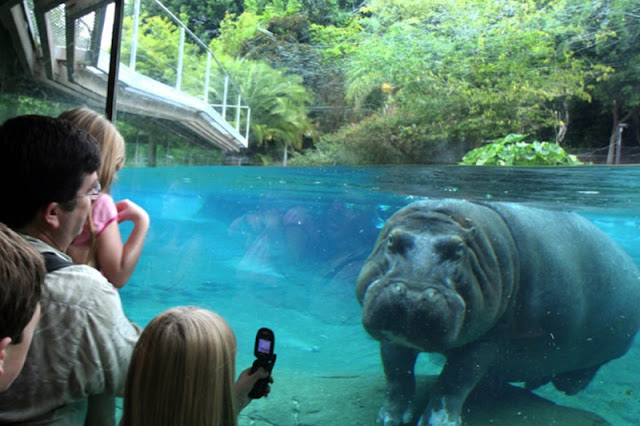 Dicas do San Diego Zoo em San Diego