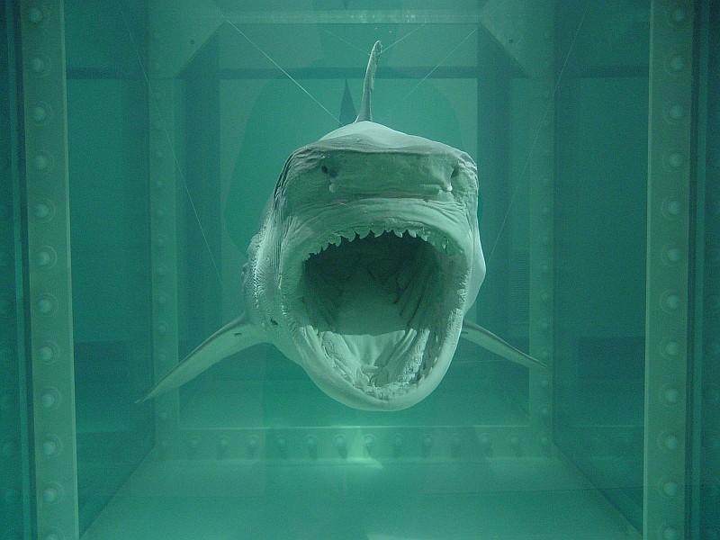 El Animal Invisible Arte Mercado Y Tiburones