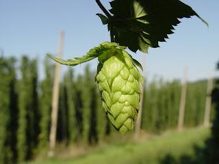 ingredientes de la cerveza