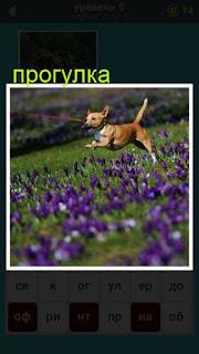 по полю с цветами на прогулке бежит собака в игре 667 слов 5 уровень