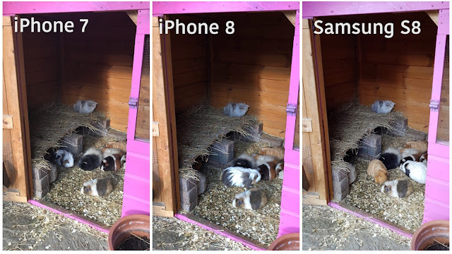 3 images of a large guinea pig hutch at Van Hage