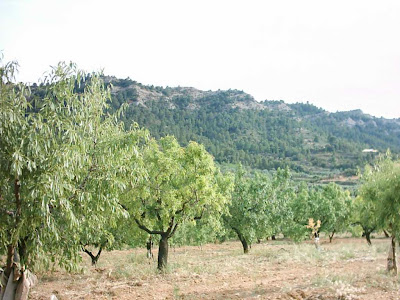 La pileta, camino, pantano de Pena, embalse, finca, almendros, olivos 19