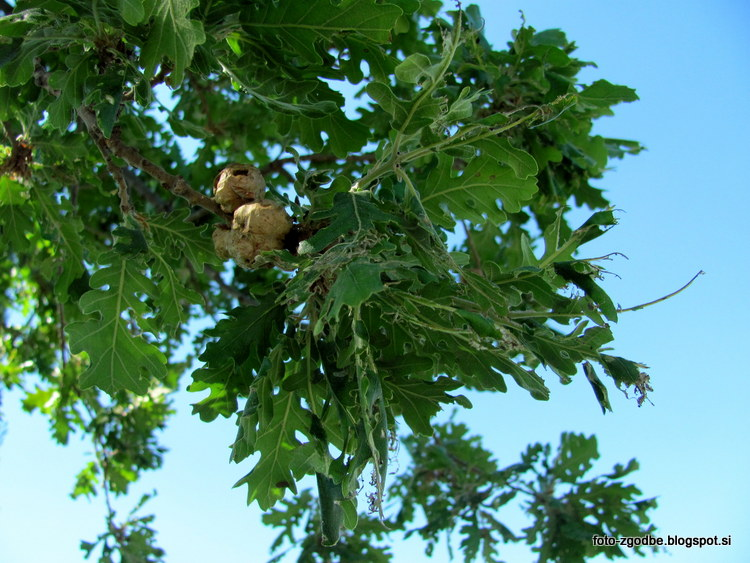 narava, drevo