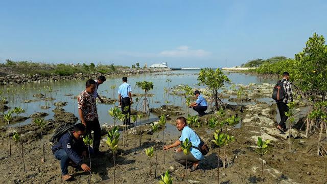 Pemantauan Hasil Konservasi Tumbuhan Bakau dan Cemara Udang di Paciran Lamongan