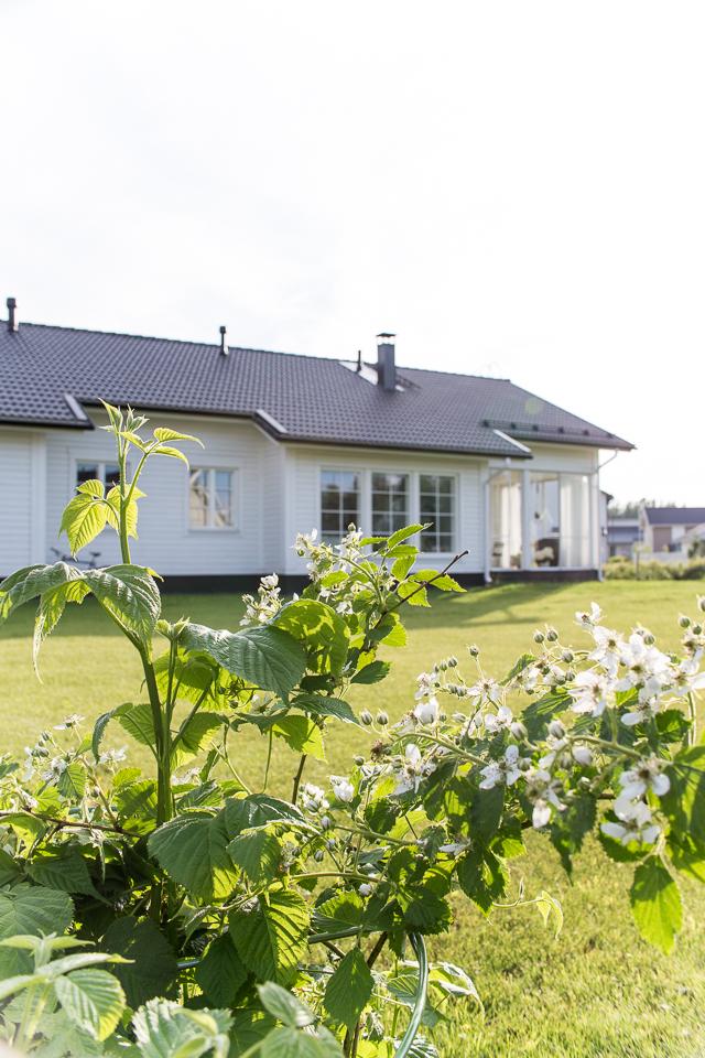 Villa h, omakotitalo, piha ja puutarha, piha, karhunvadelma