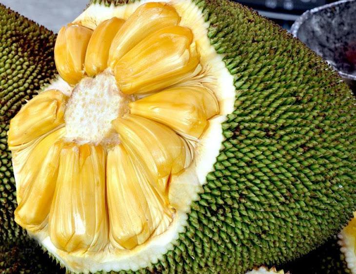 Bibit Tanaman Buah Nangka Madu Sulawesi Selatan