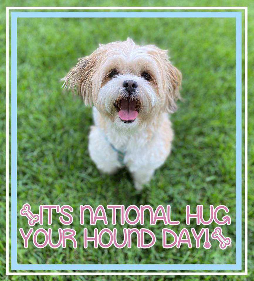 National Hug Your Dog Day Wishes pics free download