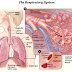 The respiratory system, breathing and lung mechanics