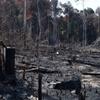 www.seuguara.com.br/desmatamento/Amazônia/