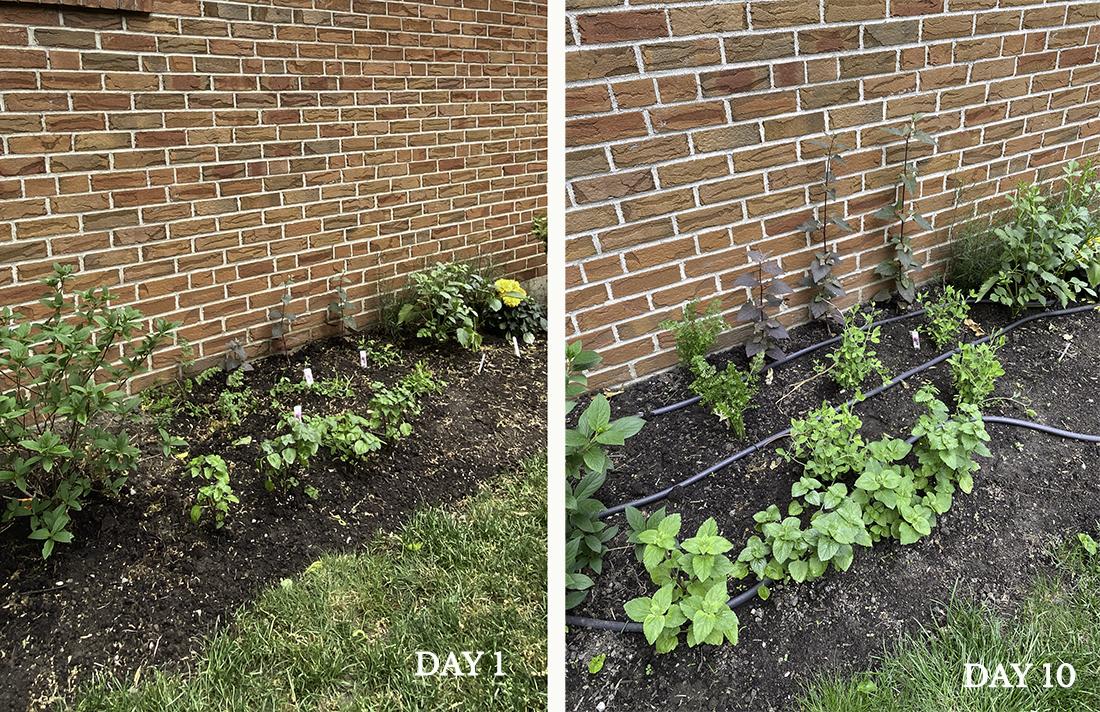 cutting garden progress