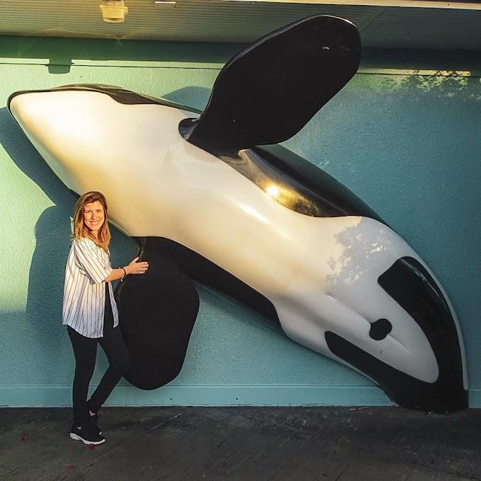 Sea World: attractions, comidinhas, filas, etc...