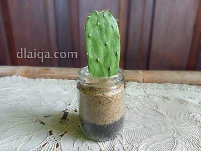 Kaktus Centong (Opuntia cochenillifera)