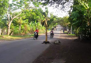 Warga Kerleko Tanam Pisang Di Jalan Provinsi