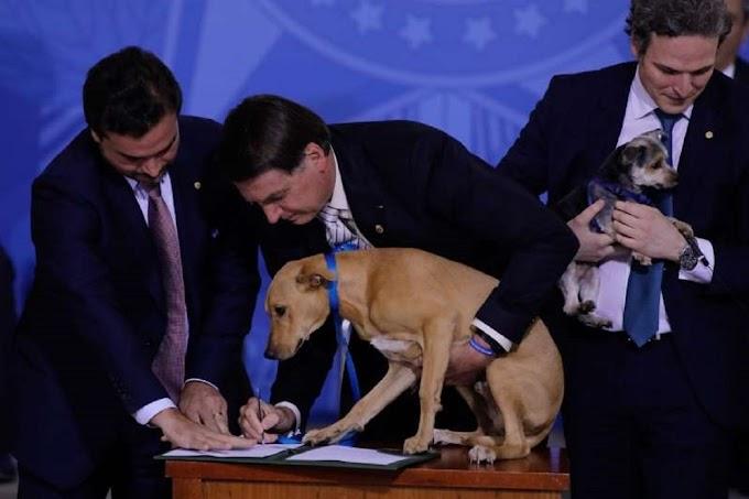Vídeo: Bolsonaro leva cachorros para sancionar lei no Planalto