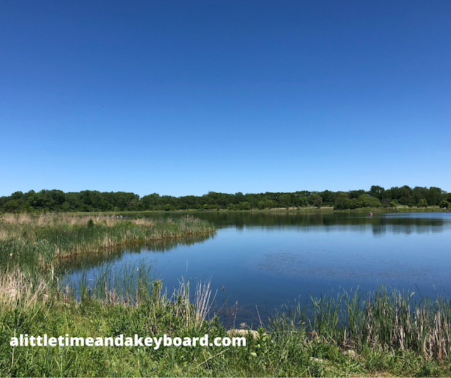 Wetlands invite the chance to observe more wildlife at Mallard Lake