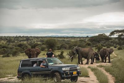 Top 5 Best Tanzania safari parks