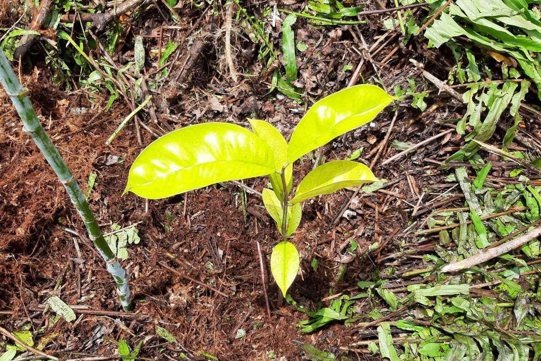 Forest Restoration Project SDGs Together in Giam Siak Kecil Bukit Batu Biosphere Reserve