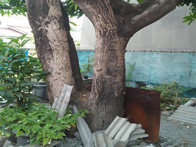 Sisi-sisi Buruk Pohon dan Cara Menebangnya