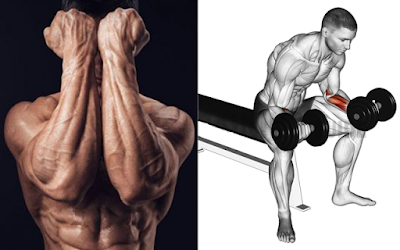The Best Exercises To Build Bigger Forearms
