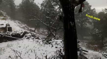 Fresh snow in garhwal