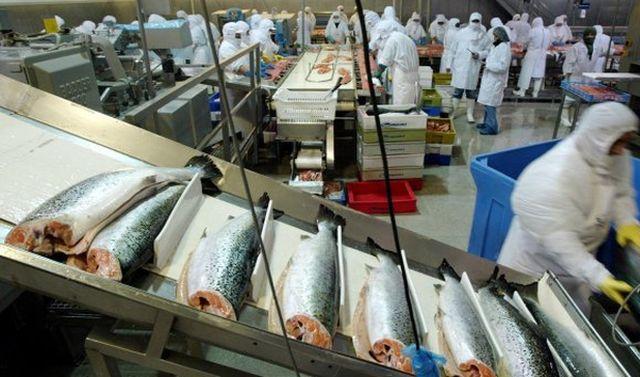 Medidas de la industria salmonera de Magallanes