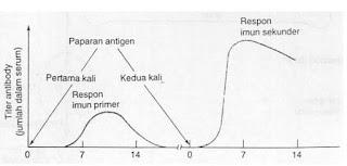 diagram cara kerja sel memori membentuk antibody kekebalan tubuh