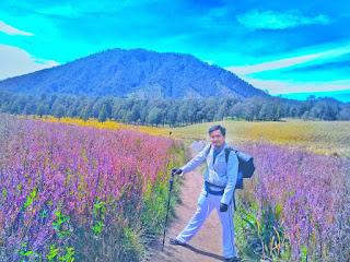 Sensasi Oro Oro Ombo Semeru, Jawa Timur yang mirip taman lavender Provence, Prancis
