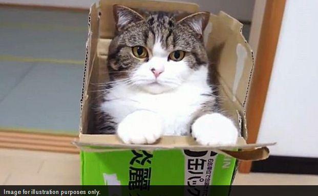 Kabar Buruk Buat Cat Lover! Seekor Kucing di Hong Kong Dinyatakan Positif Virus Corona