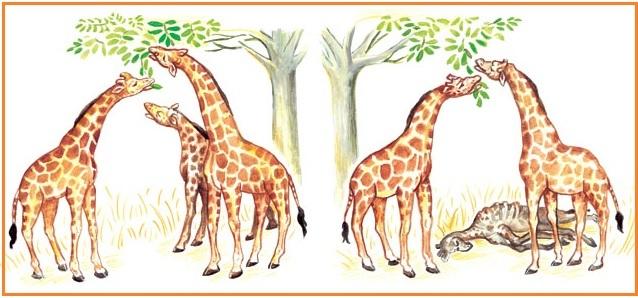 Teori evolusi darwin jerapah leher pendek mati karena makanannya semakin tinggi