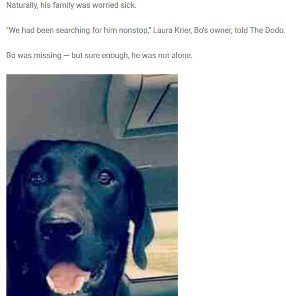 Man Finds His Missing Dog Running In Field — Then Notices He's Not Alone