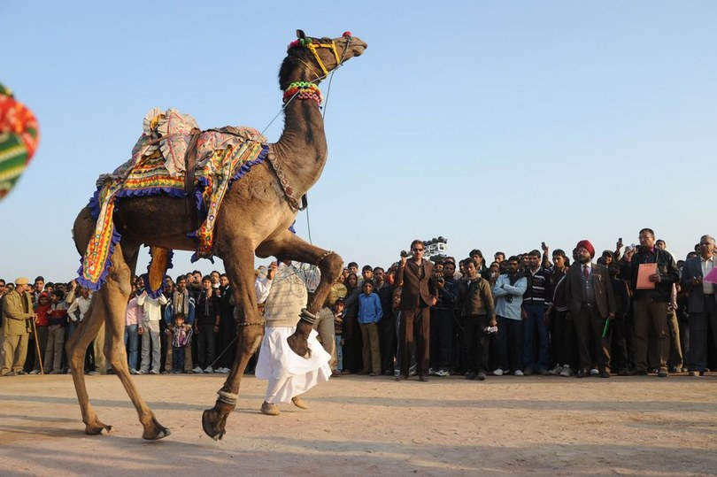 bikaner camel festival, camel festival bikaner, camel festival, camel festival india, , camel body art, camel decoration art camel hair art, art on camel body