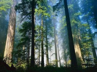 7 Daftar Negara Maju yang Tidak Memiliki Sumber Daya Alam