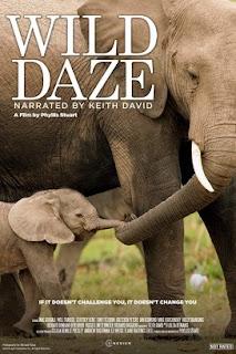 فيلم Wild Daze 2020 مترجم اون لاين