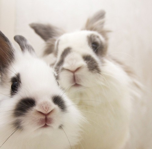 Two funny rabbits.