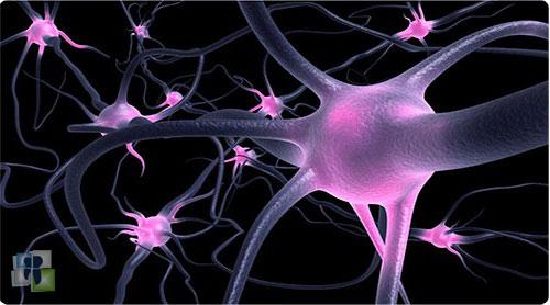 فيزيولوجيا الأعصاب وآلية العمل العصبي