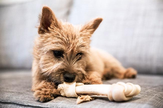 Glukozamina dla psa