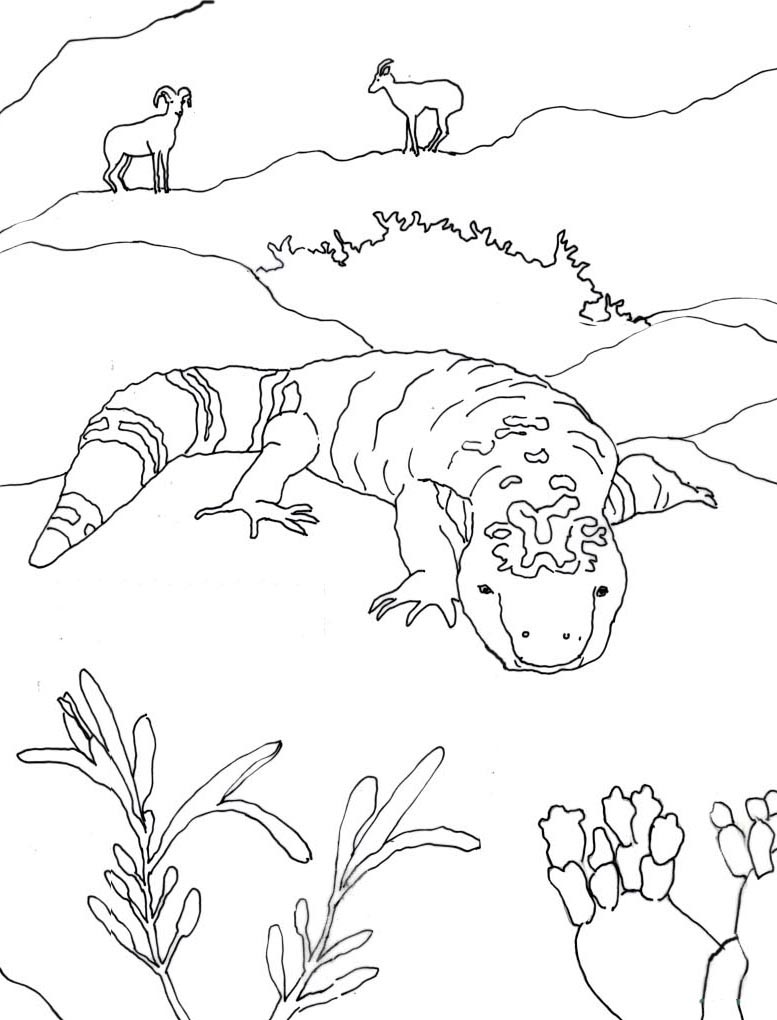 Line Drawing Of Desert Animals : Caroline arnold art and books gila monster coloring page