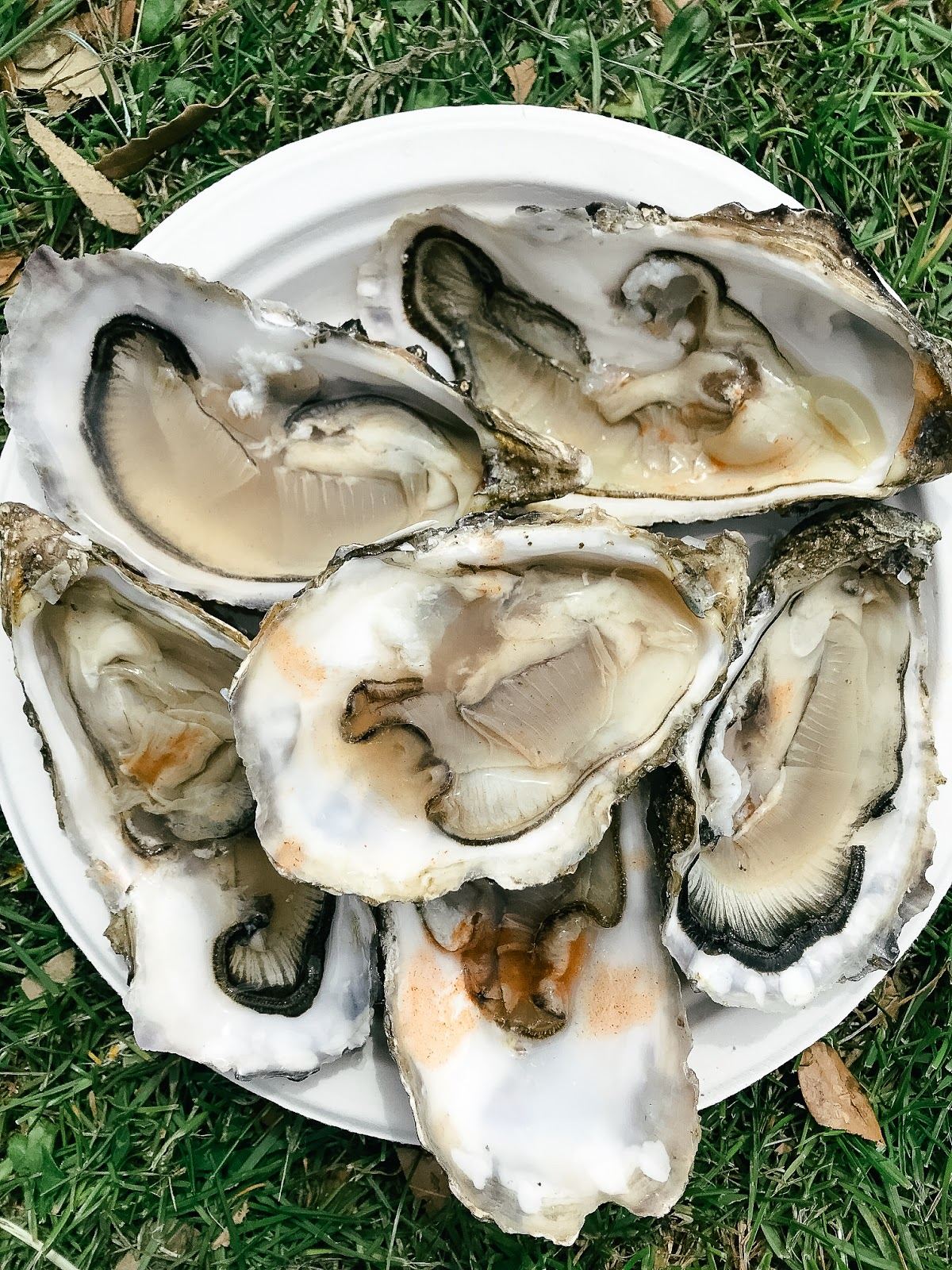 Mudeford Seafood Festival Review | Fresh Dorset oysters