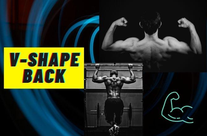 V shaped muscular back