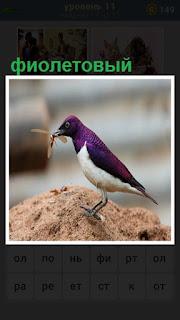 на возвышении стоит птица с фиолетовым окрасом