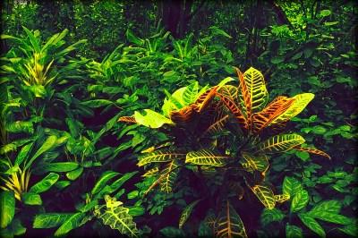 A dzsungel mélyén
