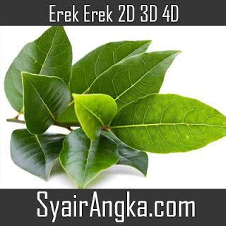 Erek Erek Daun Salam 2D 3D 4D
