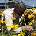 "Invitan floricultores mexiquenses a conservar tradiciones de ""Día de Muertos"" con ofrendas desde casa"