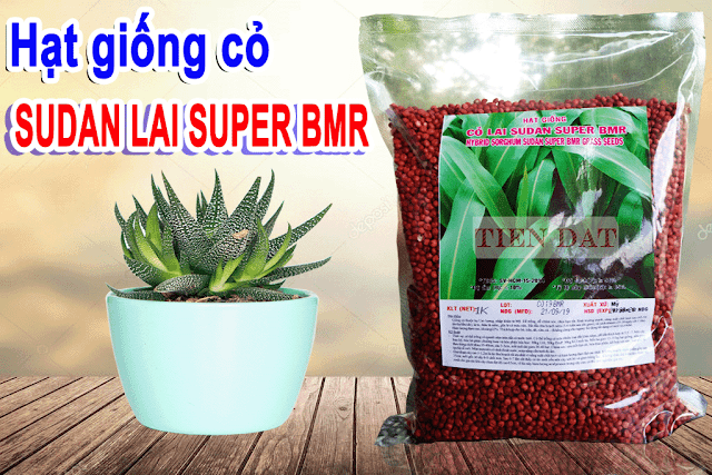Bảng giá bán hạt giống cỏ sudan lai super BMR