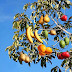 क्या आप जानते है - एक पेड़ में लगते हैं बादाम, चेरी, आडू जैसे 40 तरह के फल, जाना जाता है ट्री ऑफ़ 40 के नाम से