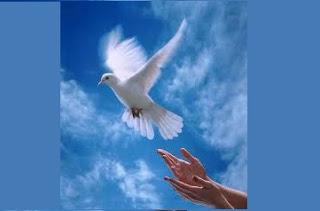 بحث حول السلام