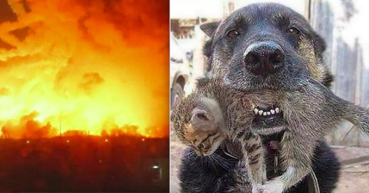 Dog Saves Kitten From Huge Fire That Swept Through Their Home In Ukraine