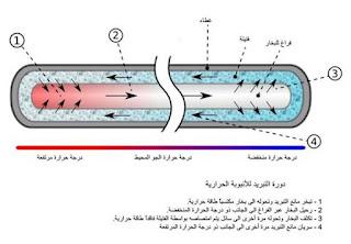 تكوين الأنبوية الحرارية ودورة التبريد لها